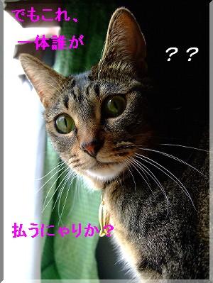 モナさん疑問