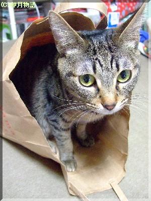 穴があったら、袋でもいいから入りたい。