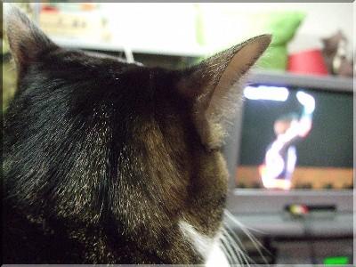 マニさんとテレビ