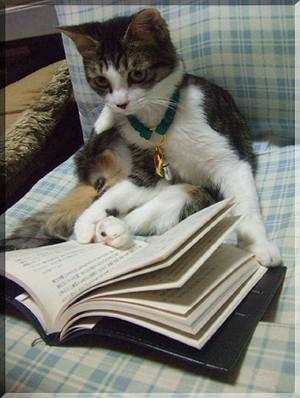 読書のマニ