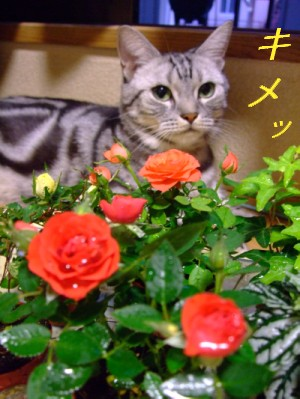 薔薇と王子と