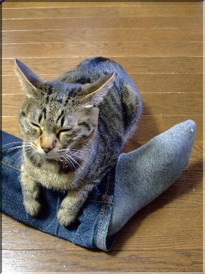 モナさん足でくつろぐ