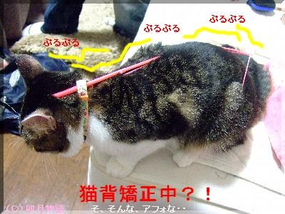 猫背矯正中