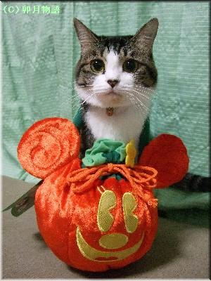 まにかぼちゃ。