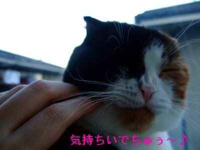 仲良しなんじゃないのぉ〜( *′ω`ノ)ノ