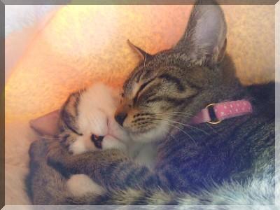 すやすやお昼寝な二匹。