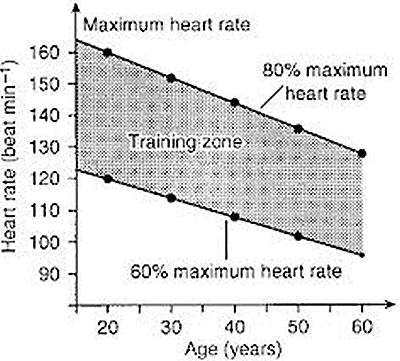 max heart rate