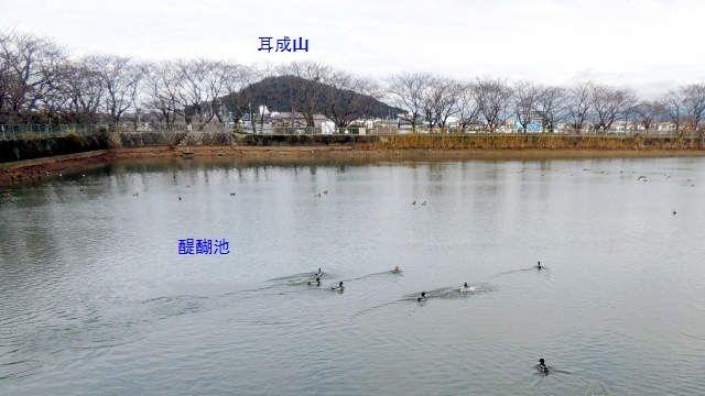 fujiwara04