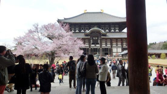 Nara_mon19