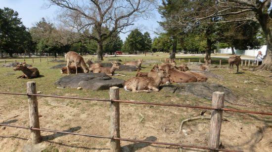 Nara_mon09
