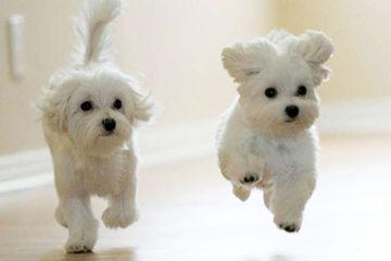 leaping-pups-photo-u2