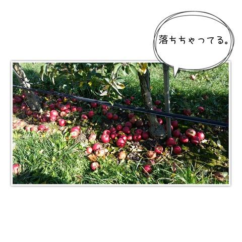 17-10-30-09-57-35-018_deco[1]