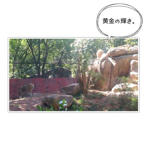 16-11-06-10-06-56-133_deco[1]