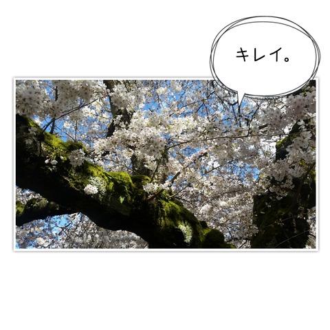 18-03-26-11-14-03-593_deco[1]