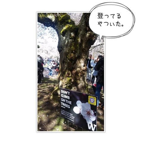 18-03-26-11-13-06-879_deco[1]