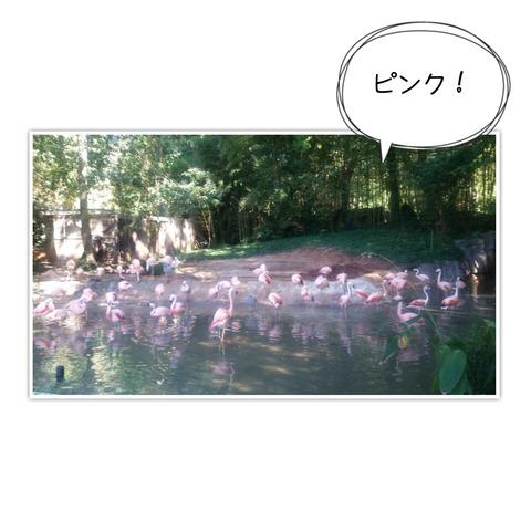 16-11-06-10-46-41-123_deco[1]