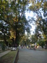 road to Angkor wat1