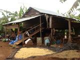 banana house1