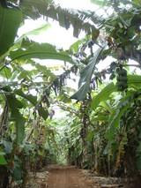 banana street1