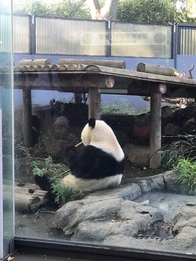 ゴッホ、パンダ、麻婆豆腐