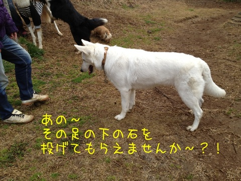 b0eba24c.jpg