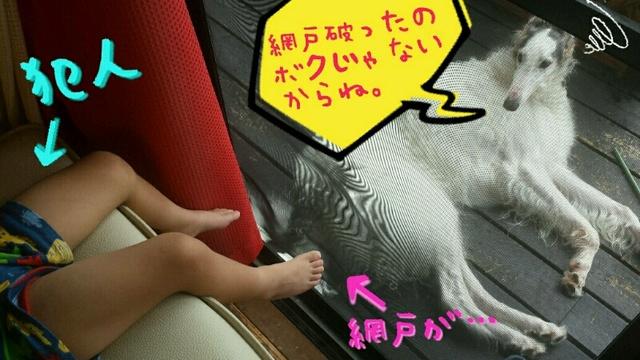 fb9cae6c.jpg