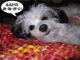 Lou onegai