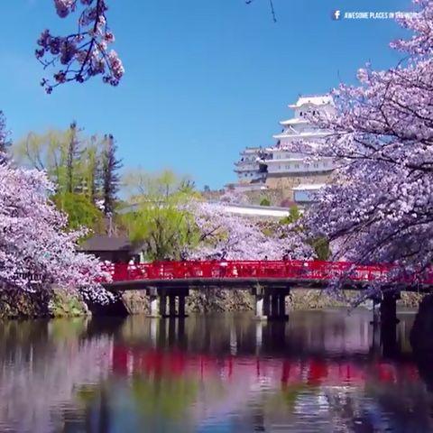 「夢のようだ」 桜の季節の姫路城のビデオが話題に 海外の反応