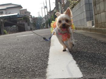 お散歩〜2