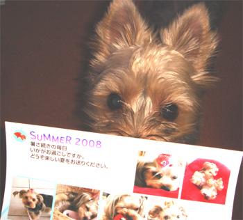 2008.8.19a