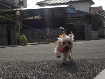 お散歩〜3