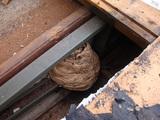 屋根裏の蜂の巣