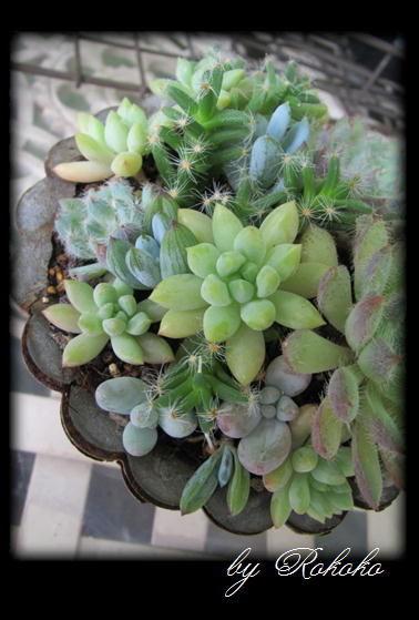 青い渚の寄せ植え2