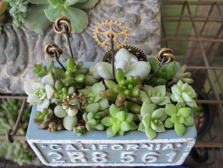 ブルーのセリア鉢寄せ植え 3