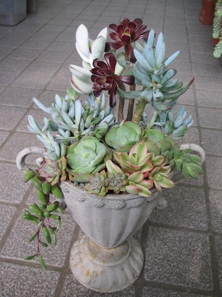 トロフィー型カップの寄せ植え2