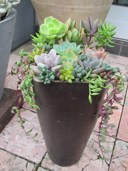 縦長鉢の寄せ植え1