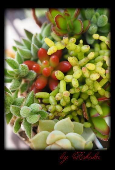 白牡丹の小さな寄せ植え4