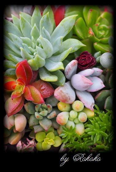 華やかな寄せ植え6