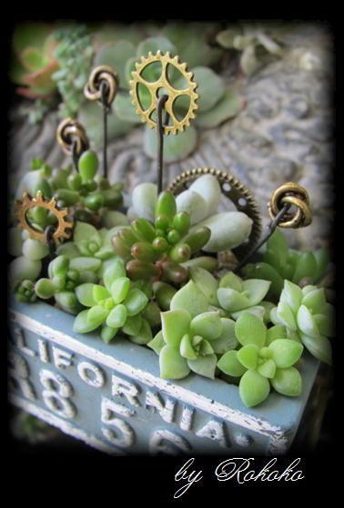 ブルーのセリア鉢寄せ植え 4