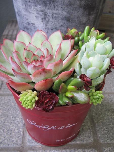 花うららの寄せ植え1