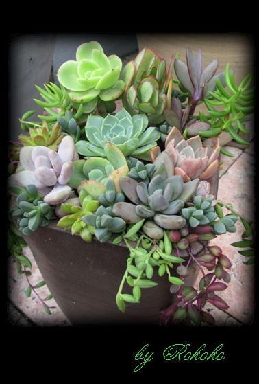 縦長鉢の寄せ植え4