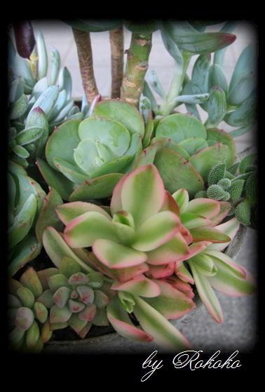 トロフィー型カップの寄せ植え5
