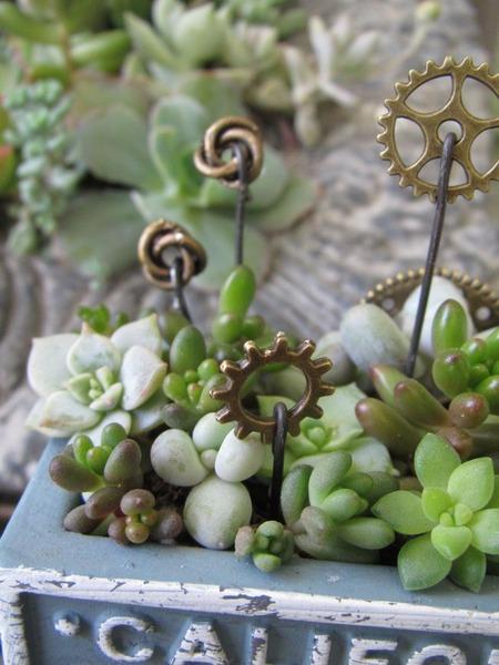ブルーのセリア鉢寄せ植え 2