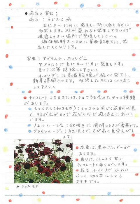 2_kobayashi_0731c