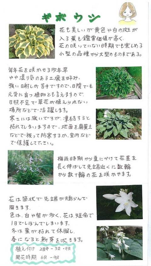 5-kawai_0224