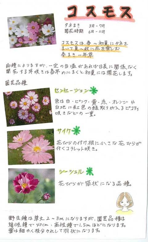 7-kawai-0611