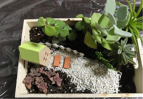 植物を植えていく