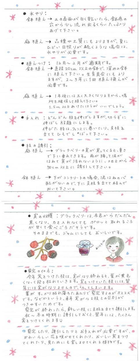 2_koyayashi_1127b