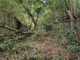 金岬砲台砲側庫1