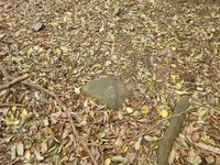 21中世観瀧寺跡礎石か
